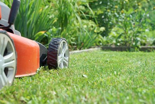 Gazon onderhoud: van graszaad zaaien en sproeien tot het gazon verticuteren en beluchten