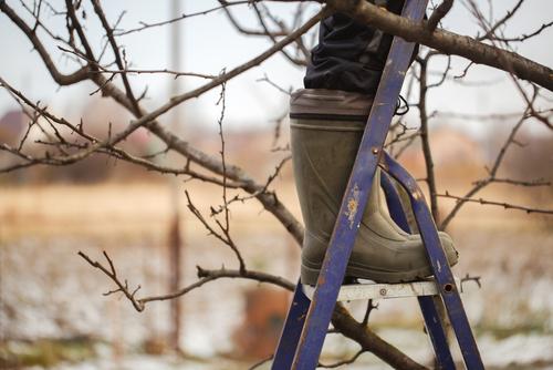 Bomen snoeien of rooien: hoe & wanneer doe je dat?