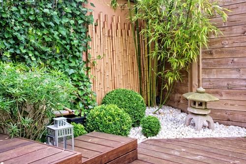 bamboo tuin