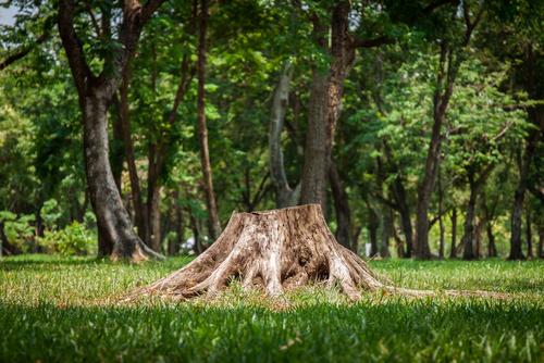 Drie manieren om zelf een boomstronk te verwijderen