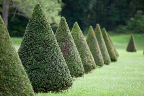 Alles over coniferen: snoeien, planten, toppen en verplaatsen